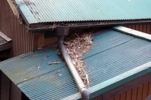 屋根の上の落ち葉