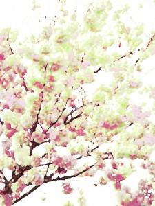 桜の新芽イメージ
