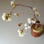 桜の生け花