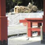 鎌倉八幡宮イチョウの倒木